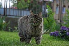 Cat in the garden. Royalty Free Stock Photos