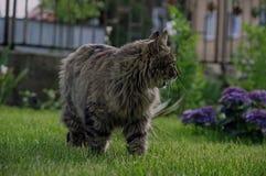 Cat in the garden. Stock Images