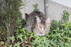 Cat in a garden. Cat playing in a garden Royalty Free Stock Photo