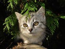 Cat in the garden. Portrait of gray kitten outside in the garden Stock Photos