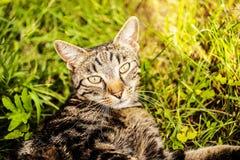 Cat in the garden. Portrait of grey cat in grass in the garden Stock Photo