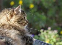 Cat in Garden Stock Photo