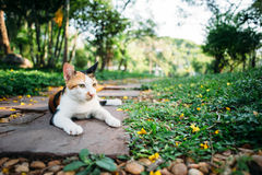 Cat in garden. Relax Asia cat in green garden Royalty Free Stock Photography