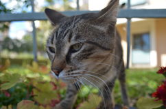 Cat in the garden through the rots of grating Royalty Free Stock Photo