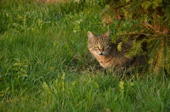 Cat in the garden. Cat sitting under the tree in the garden Stock Photography