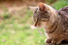 Cat In The Garden. Sleepy tabby cat lying down in the garden. Head close-up. Selective focus, colorful bokeh stock image