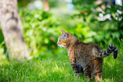 Cat in the garden Royalty Free Stock Images