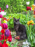 Cat in the garden. Surrounded by flowers Stock Images