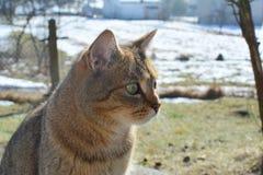 Cat in garden Stock Images