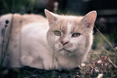 Cat in garden Stock Photos