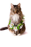 Cat with garland Stock Photo