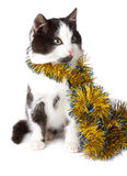 Cat with garland Stock Image