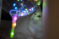 Cat and garland. Colorful background royalty free stock image