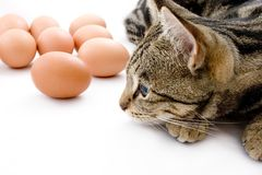 Cat Gaurding Eggs Royalty Free Stock Photo