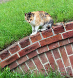 Cat gaze ahead Stock Photo