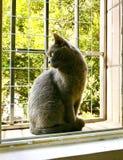 Cat Gaze fotografia stock libera da diritti