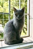 Cat Gaze fotografia stock