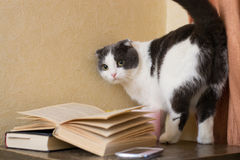The cat with a gaze standing near books on the nightstand. The cat with a gaze standing near books Royalty Free Stock Image