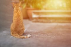 Sitting cat. Cat gazing straight and sun flare Royalty Free Stock Image