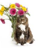 Cat and Gerbera Dasies Stock Photography