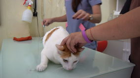 Cat Get Injection am Tierarzt Clinic stock video footage