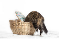 Cat getting into Basket Royalty Free Stock Photography
