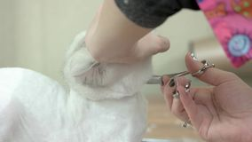 Cat getting haircut, scissors. stock video