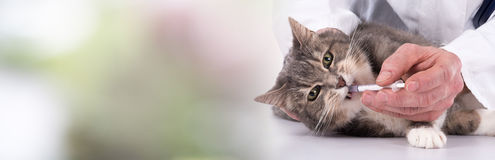 Cat getting medication. On blurred background Stock Photo