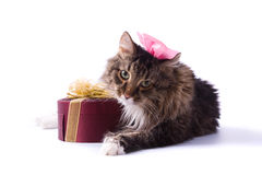 Cat with gift Royalty Free Stock Photos