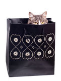 Cat in gift bag Stock Photos
