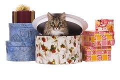Cat in gift box Stock Photo