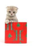 Cat in gift box Stock Photos