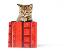 Cat in gift box Royalty Free Stock Images