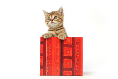 Cat in gift box Royalty Free Stock Image