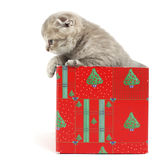 Cat in gift box Stock Photo