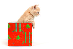 Cat in gift box Royalty Free Stock Photos