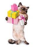 Cat with gift Stock Image