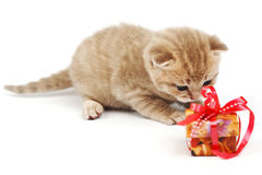 cat and gift Stock Photos