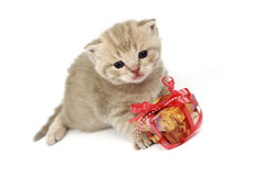 cat and gift Royalty Free Stock Photo