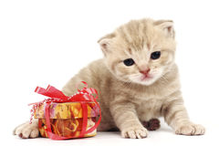 cat and gift Royalty Free Stock Image