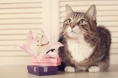 Cat with gifts Royalty Free Stock Photo