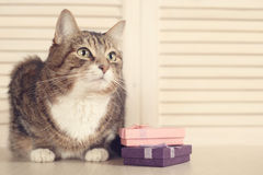 Cat with gifts Royalty Free Stock Image