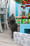 Cat with gifts. Under the tree. Christmas mood. A cat in the apartment. Royalty Free Stock Photos