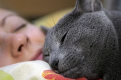 Cat and girl sleep. Ing in the bed Royalty Free Stock Photo