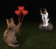 Cat gives bouquet of hearts. The cat gives a bouquet of ruby hearts to his beloved in the night Stock Photography