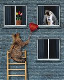 Cat gives a ruby heart to his bride royalty free stock photography