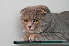 Cat on a glass Royalty Free Stock Photo