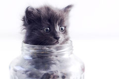 Cat in a glass jar. Little cat plays in a jar Royalty Free Stock Images