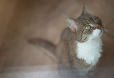 Cat through glass pane Stock Photography