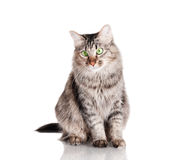 Cat on glass surface Royalty Free Stock Photos